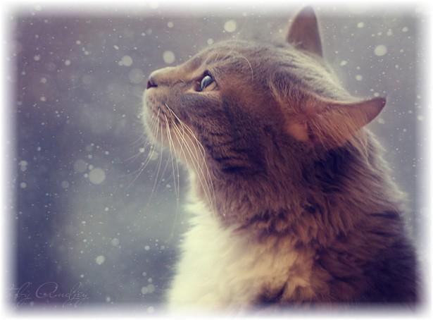 v ogidanii snega