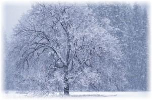парки лен области зимой