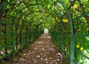 аллея верхний сад