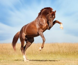 конный клуб гравюра1