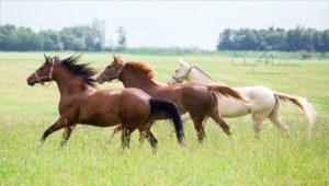конный клуб гравюра2