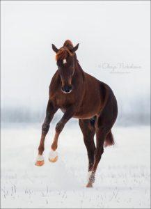 конный клуб гравюра
